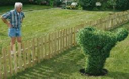 funny picture of hedge