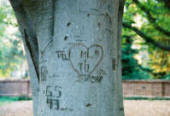 lovers initials carved in a tree with heart around it